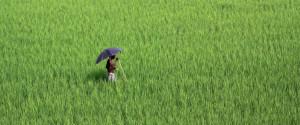 India Farm Rural
