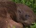 Baby Seal Found On Australian Cattle Farm 21 Miles Away From Ocean