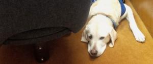DOG IN COURTROOM CABER