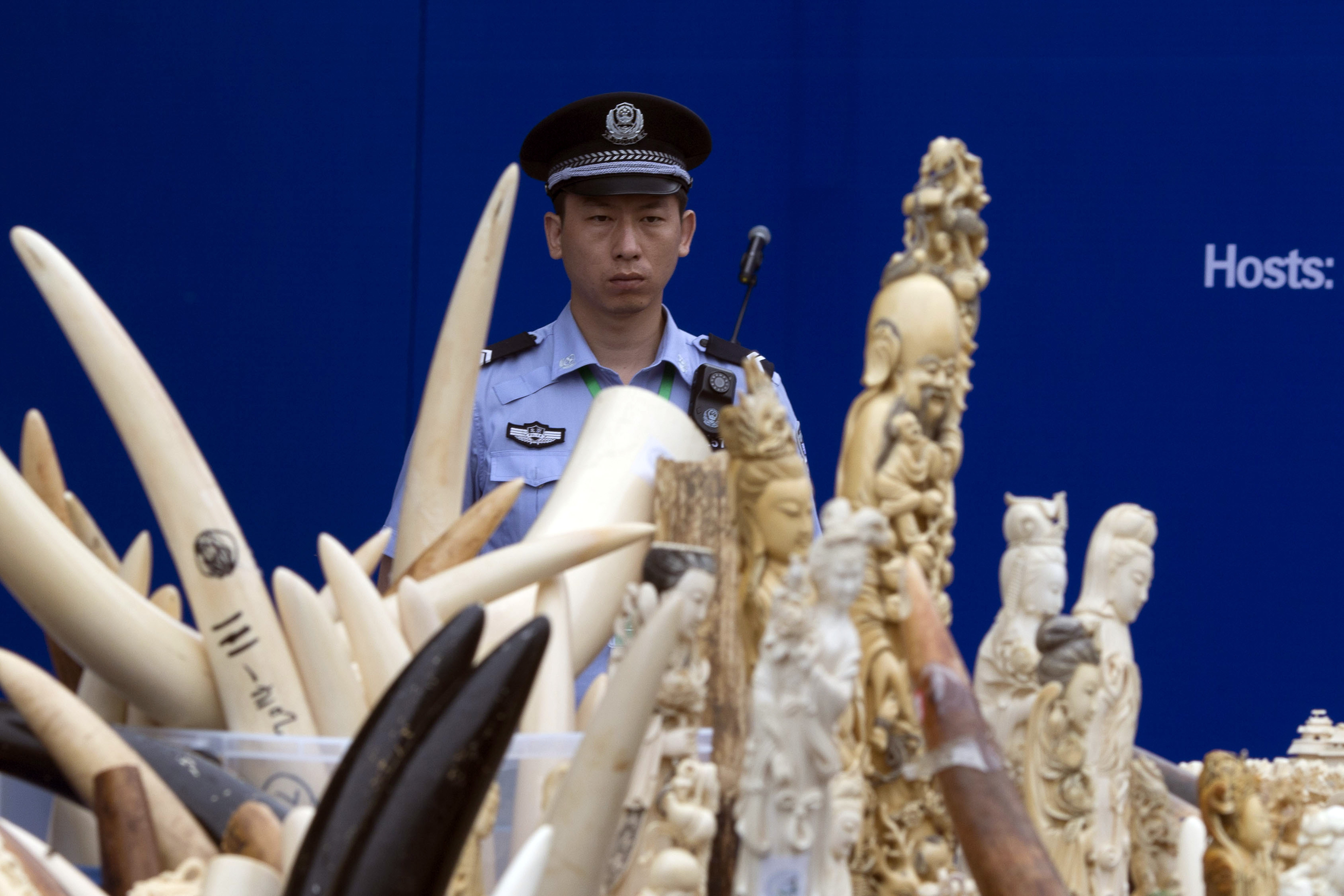 china ivory