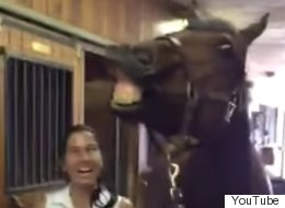 This Horse Knows Exactly How To Handle Being Sung 'Happy Birthday'