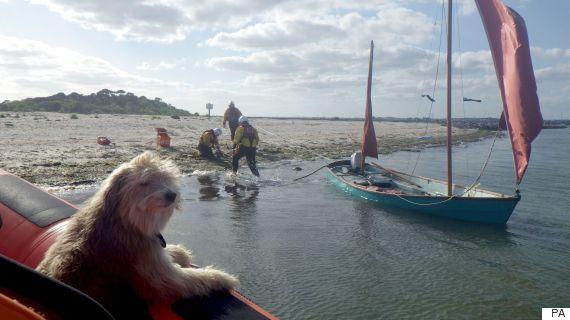 man dog boat