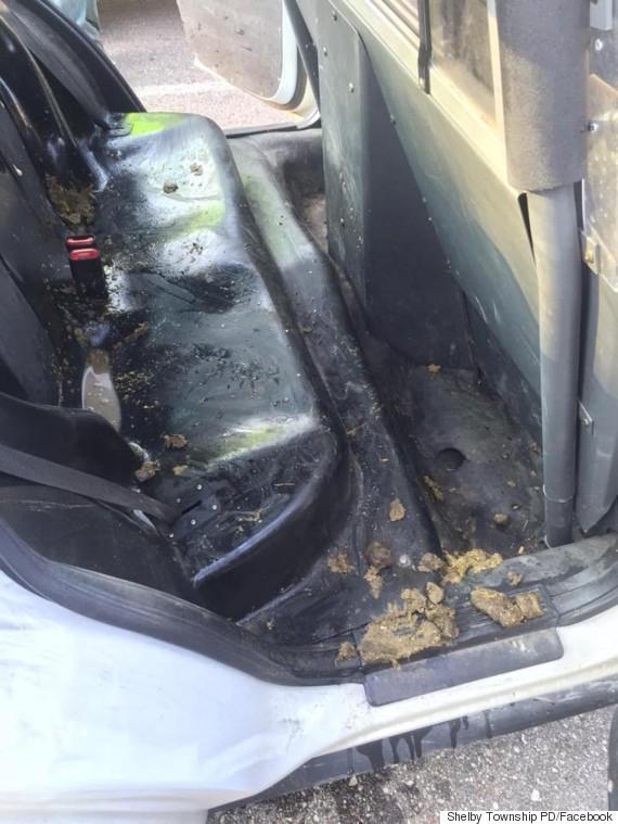 pig poop in cop car