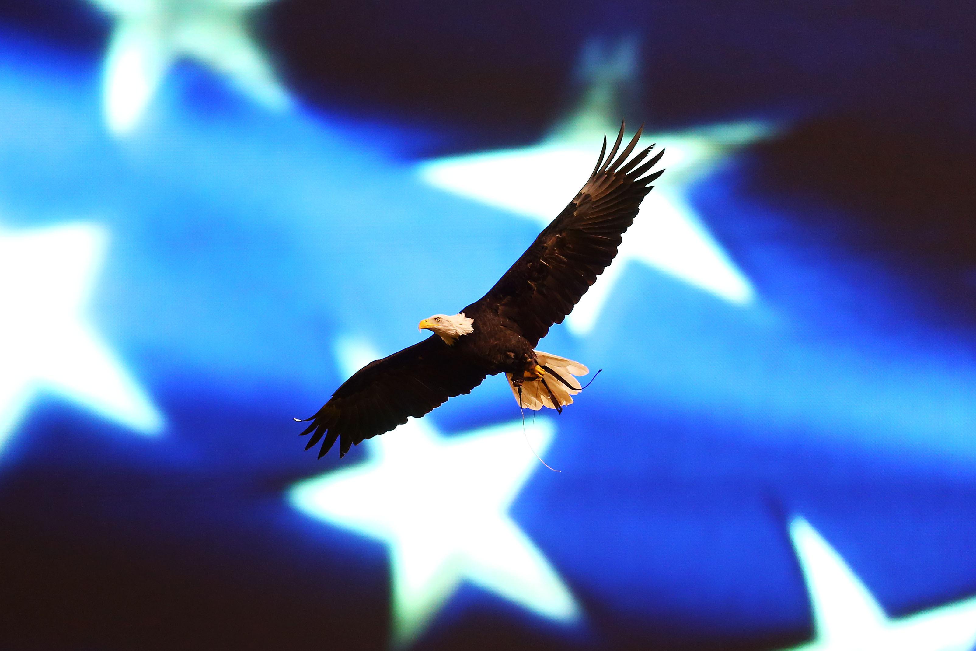bald eagle america