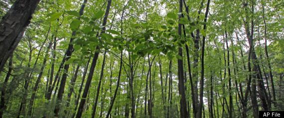 FOREST THREAT
