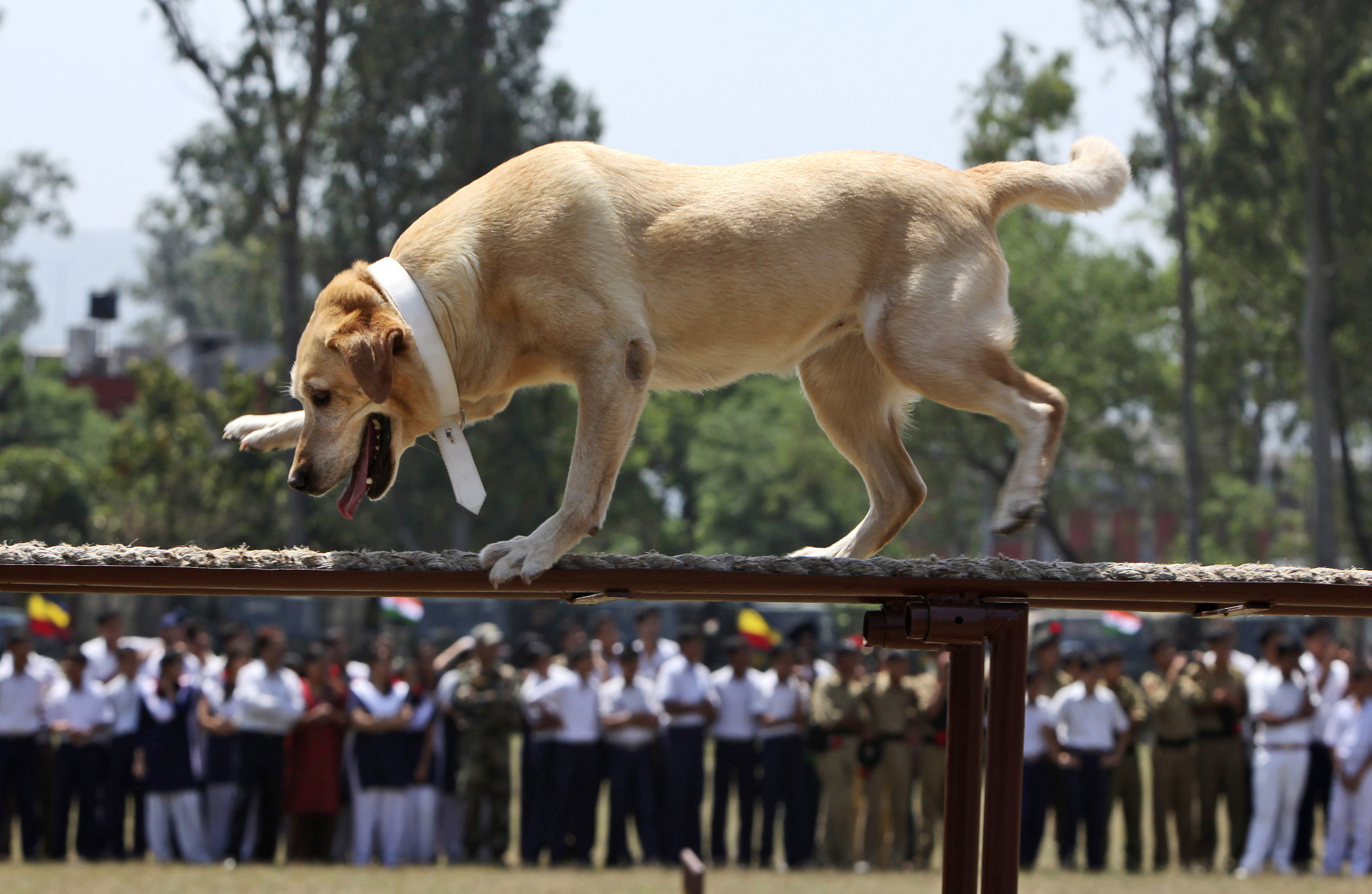 indian army dogs