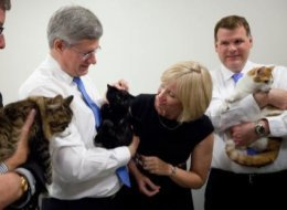Pet cats, Prime minister and Pets on Pinterest