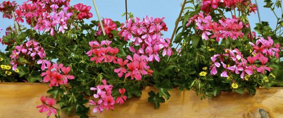gift im eigenen garten 15 pflanzen die f r haustiere t dlich sein k nnen. Black Bedroom Furniture Sets. Home Design Ideas