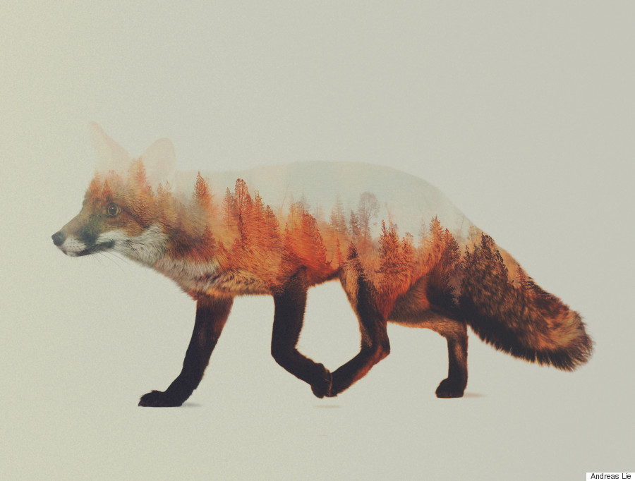 fox woods