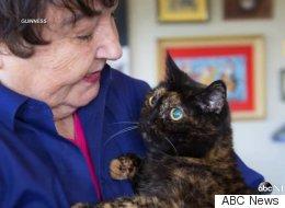 Murió la gata más vieja del mundo a los 27 años