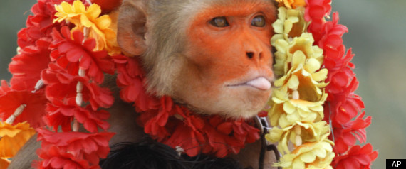 Monkey Ceremony