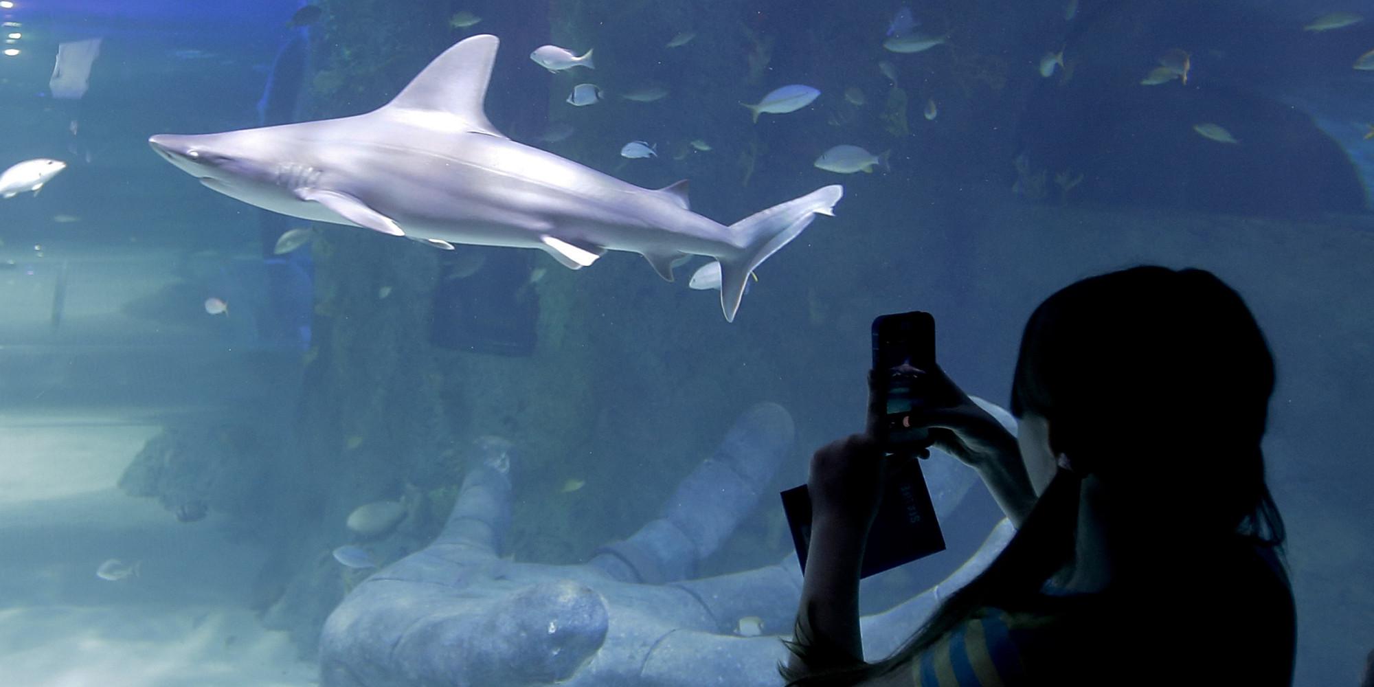 Fish aquarium tarapur - Header Image