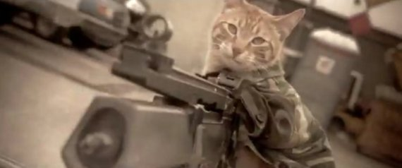 MEDAL OF HONOR CAT
