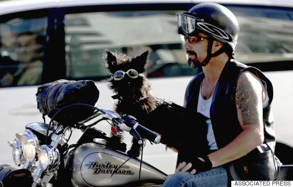 dogs mans best friends