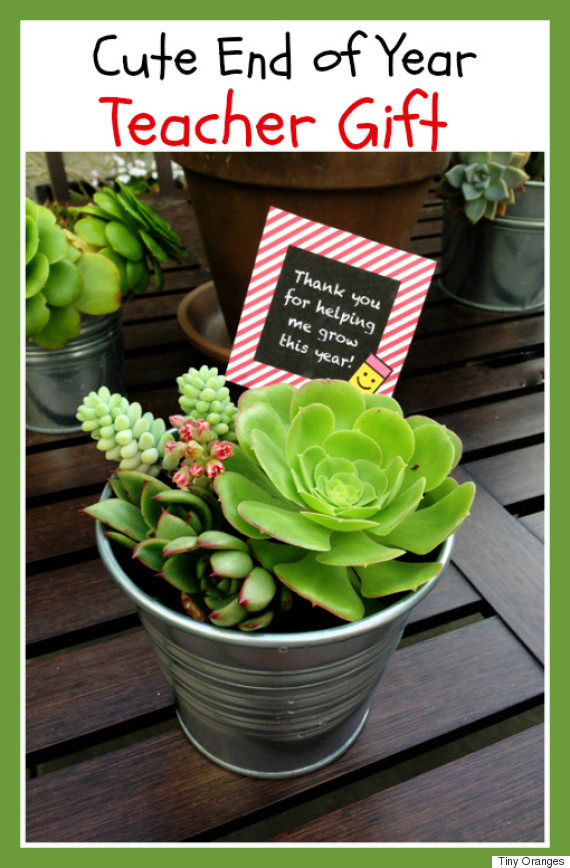 succulent & We Searched Pinterest For Teacher Gift Ideas So You Donu0027t Have To ...