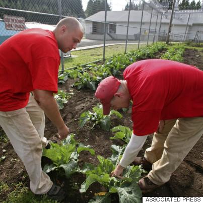 inmates garden