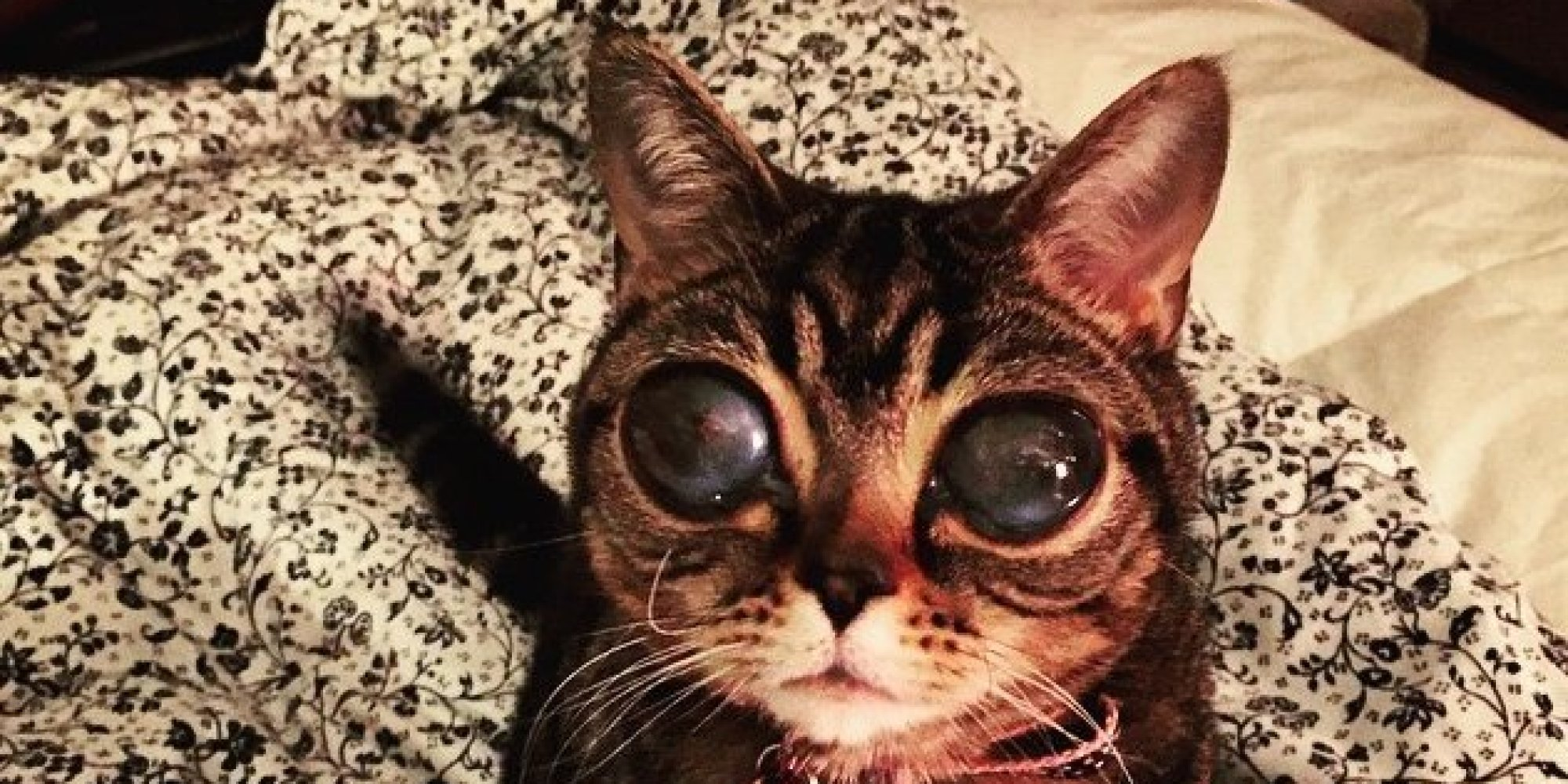 Meet Matilda The Cat That Looks Like An Alien And Has