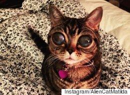 Matilda, la 'gata extraterrestre', solo quiere acurrucarse