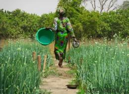 El dique que recuperó un vergel en Senegal