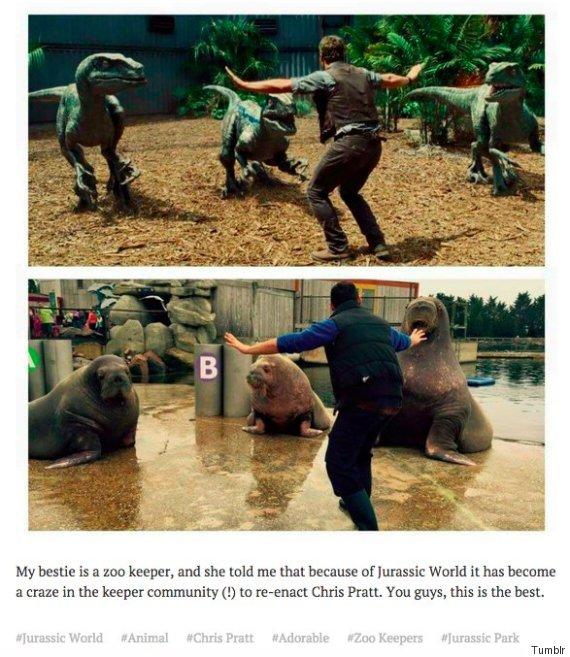 walrus prattkeeping