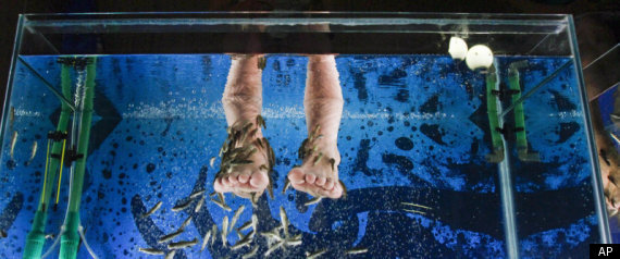Fish pedicures banned by vancouver island authorities for Fish pedicures illegal in 14 states