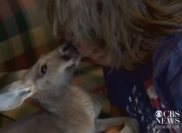 Town Bans Seeing-Eye Kangaroos For The Blind