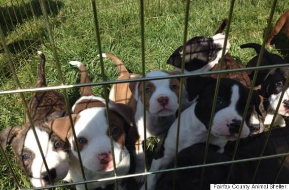 fairfax county animal shelter
