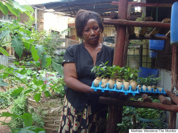 Vivasaayam innovative small space sack farming gardening - Small space farming image ...