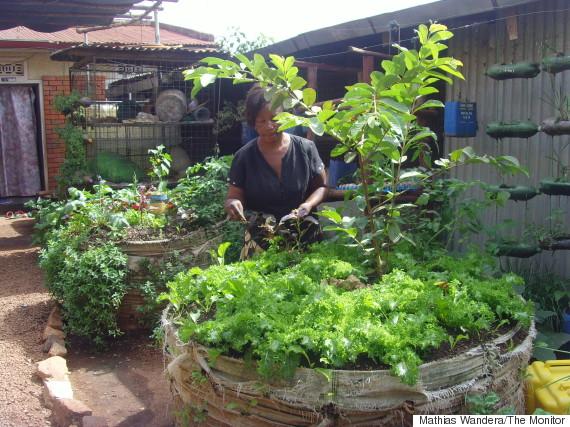 sack farming