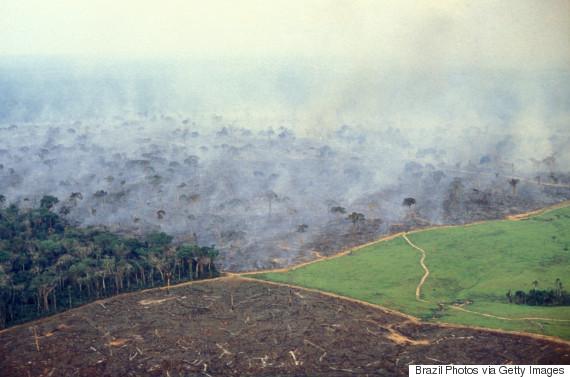deforestation aerial