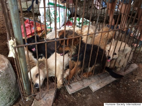yulin dog maat festival