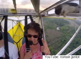 Gatita toma accidentalmente un vuelo en aeroplano (VIDEO)