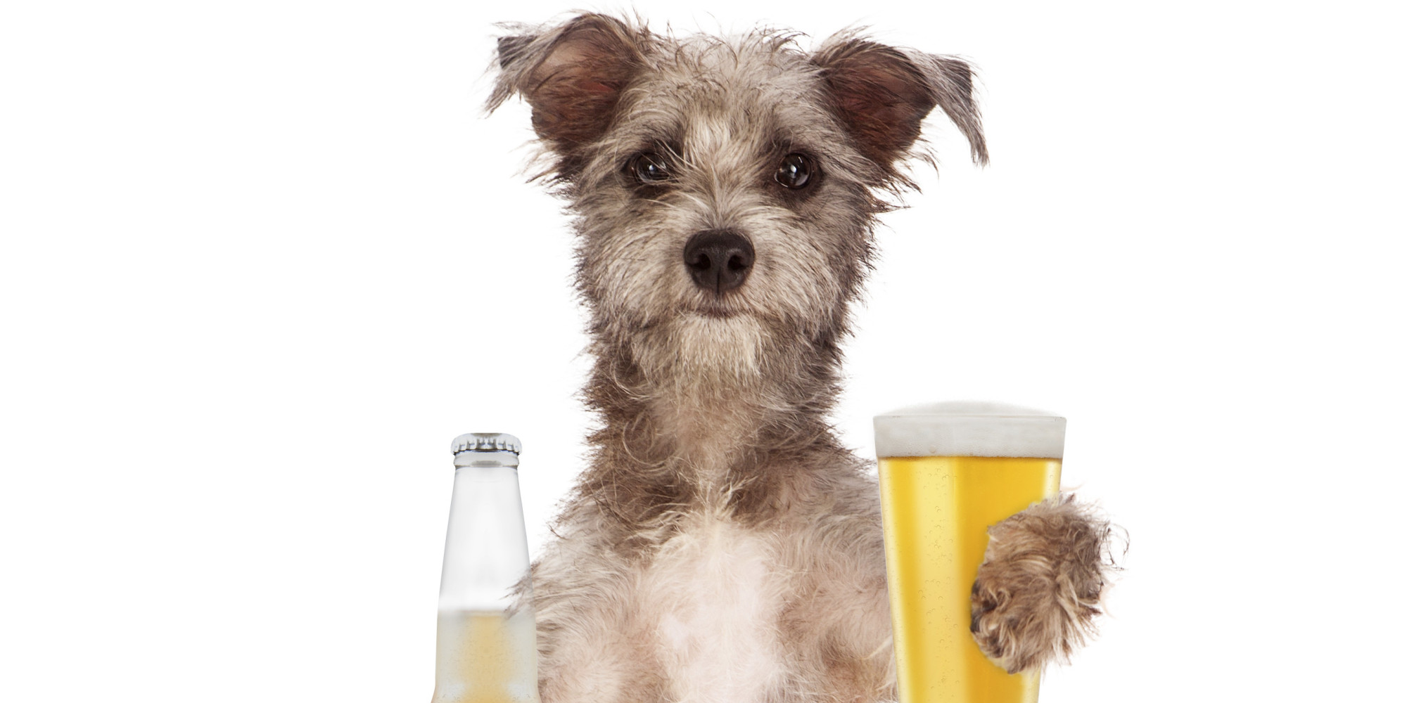 Dogs Fetching Beer Compilation Video Proves Canines Are ...