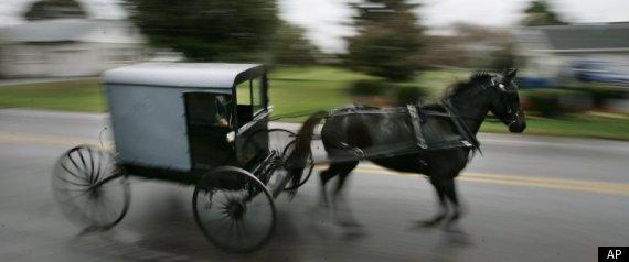 Amish Horse Buggy