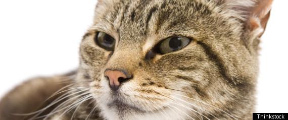 CAT JAMES FORTE