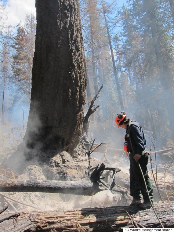 bc tree elaho fire