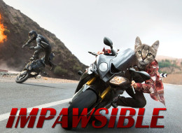 Tom Cruise Replaced With A Kitten In 'Misson:Impossible' Clip