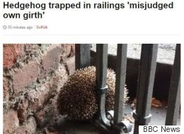 How One Hedgehog Gave Rise To The Best Local News Headline Ever