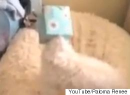 Adorable Puppy Gets Head Stuck In Tissue Box
