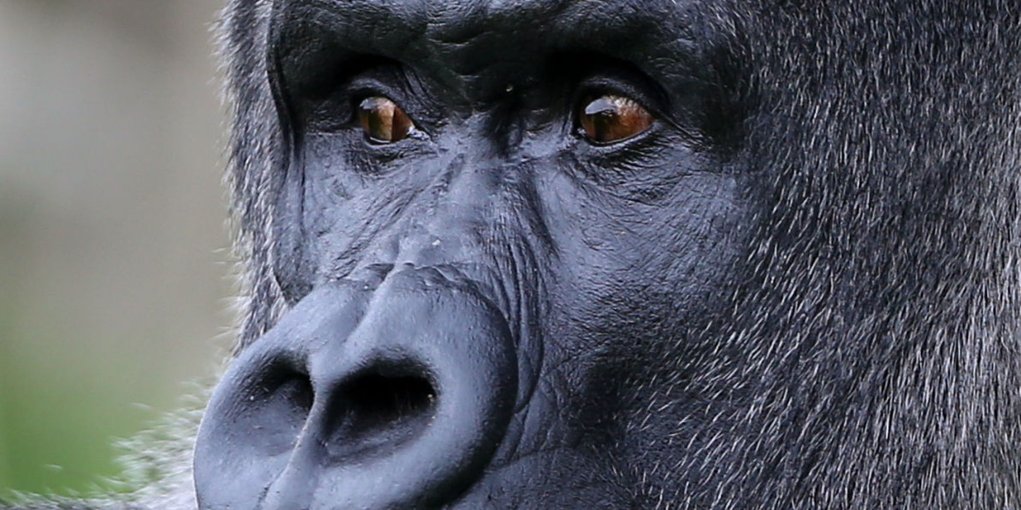 Секс бесплатно с гориллами 17 фотография