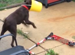 Dogs Stuck In Stuff: Compilation Video