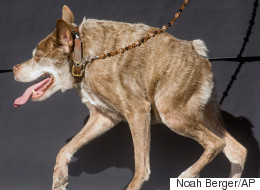 It's Official: This Is The World's Ugliest Dog