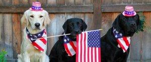 DOG SAFETY 4TH JULY