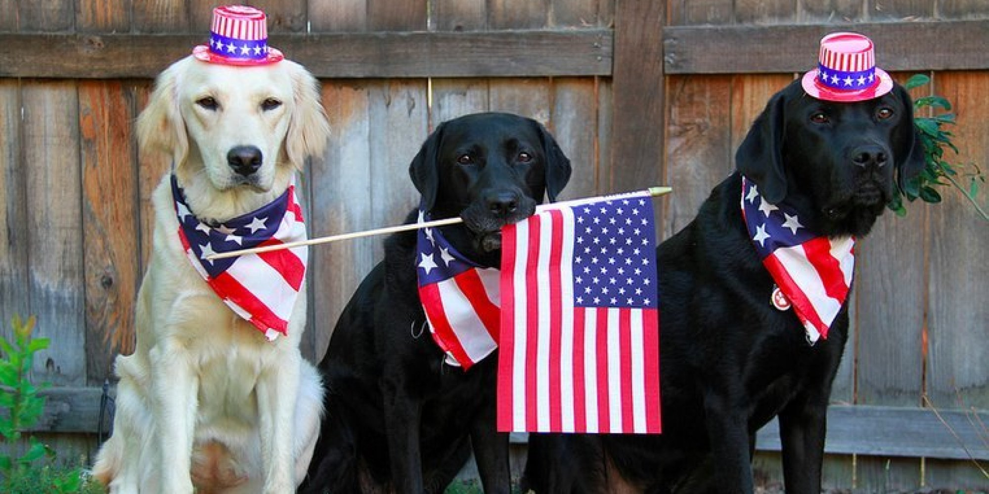 Funny dog happy 4th of july wish the best collection of quotes a lot of dogs will go missing over 4th of july weekend here are 9 kristyandbryce Gallery