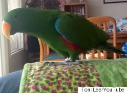 Parrot Dances To 'Sexy And I Know It'
