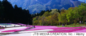 JTB MEDIA CREATION INC AND ALAMY