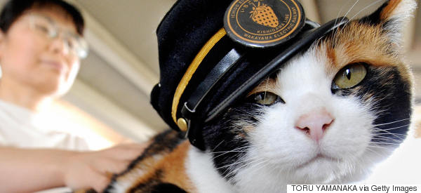 Thousands Attend Funeral Of Tama The Cat, Famed Feline Stationmaster