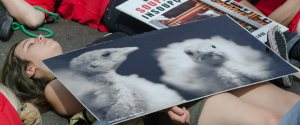 Slaughterhouses Protest