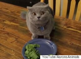 Crafty Cat Won't Finish His Veggies