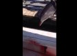 Freak Dolphin Accident Leaves Woman With 2 Broken Ankles